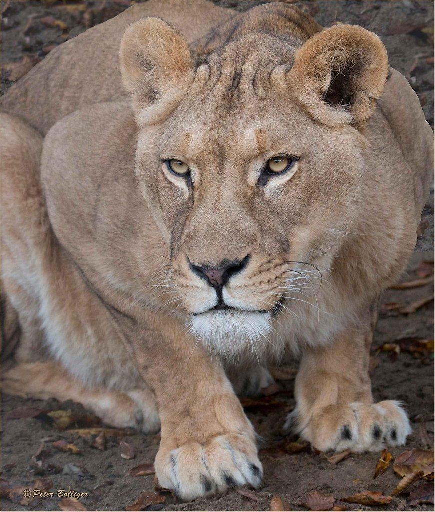 Mama leone - November 2016